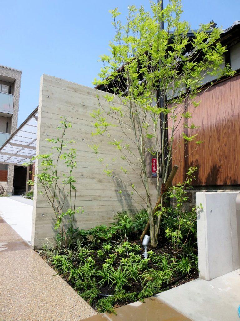 奥に駐輪場がある手前の木目調の塀、前に木が植えられている