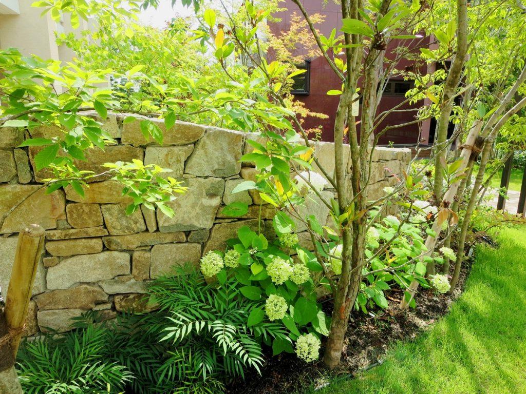 石張りの低い塀の前に植えられた樹木や植物